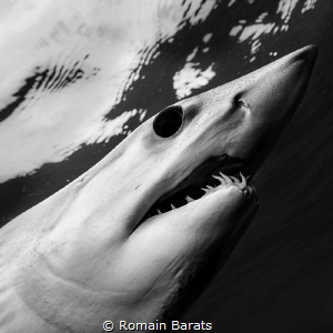 The eye of a legend.